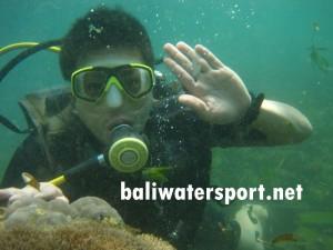 diving-tanjung-benoa