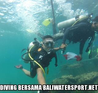 diving untuk pemula di bali