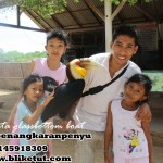 turtle-farm-tanjung-benoa
