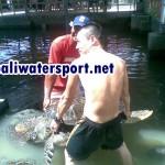 turtle-island2