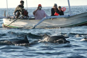 Tour Lovina ,Tiket Dolphin Watching dan Sewa Perahu Lovina