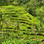 Tegallalang_ubud