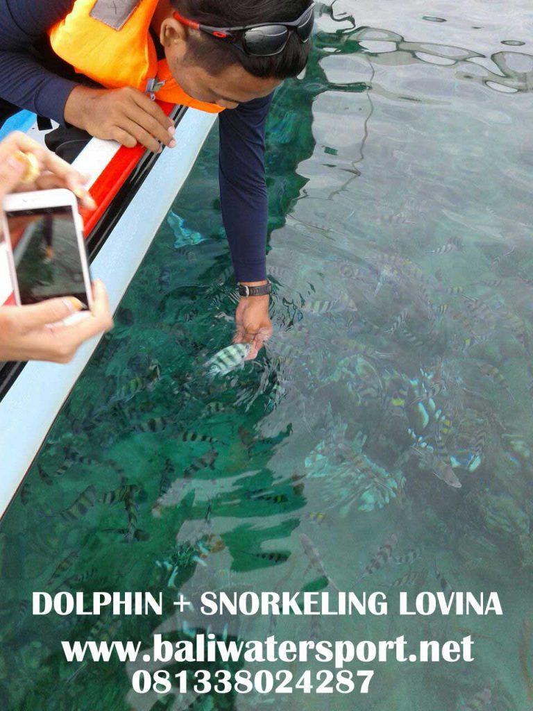 dolphin-dan-snorkeling-di-lovina