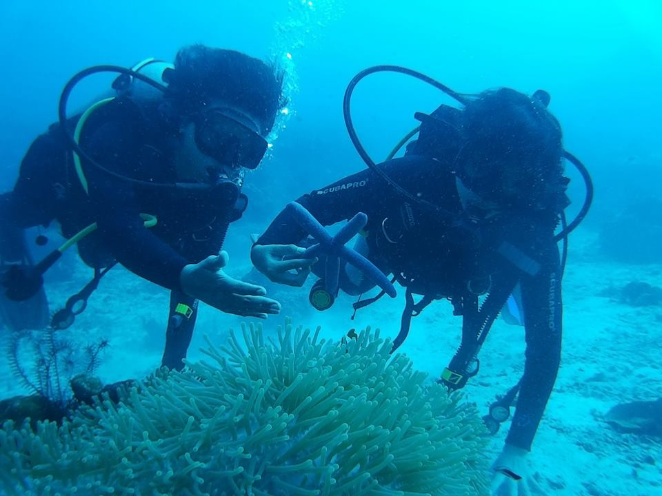 menjangan diving packages