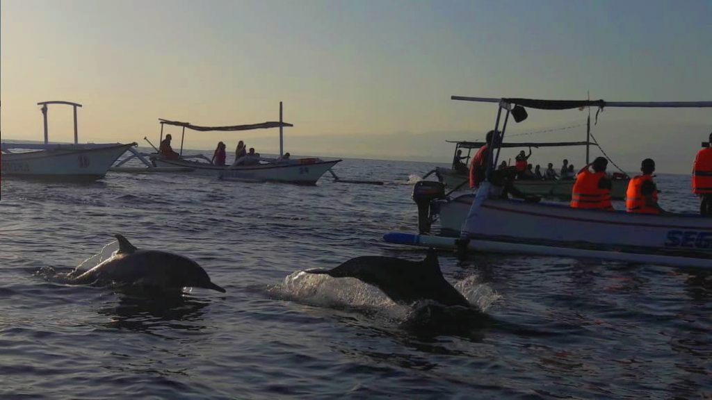 Dolphin watching di lovina